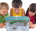 Pet Dwarf Frog Kits