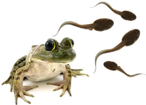Frog and tadpole - photo#16